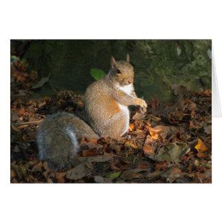 Graues Eichhörnchen - Hinterkanten-Park, Cardiff, Karte
