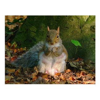 Graues Eichhörnchen - Hinterkanten-Park, Cardiff, Postkarte