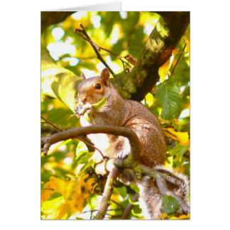 Graues Eichhörnchen im Herbst Karte