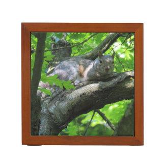 Graues Eichhörnchen in einem Baum Stifthalter