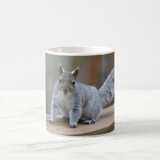 Graues Eichhörnchen Kaffeetasse