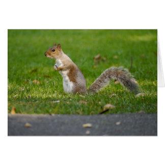 Graues Eichhörnchen notecard Karte