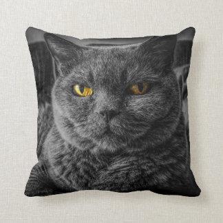 Graues Katzen-Haustier-Kissen Kissen