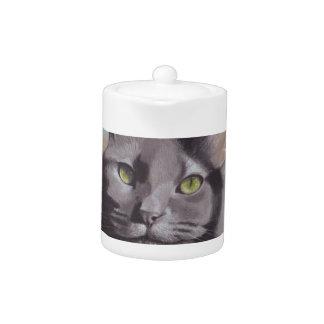 Graues Katzen-Haustier-Porträt