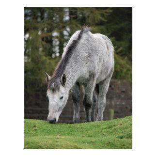 Graues Pferd Postkarte