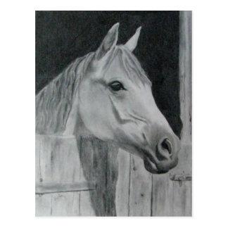 Graues Pferd Postkarten