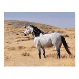 Graues wildes Pferd auf Strecke, Utah Postkarte