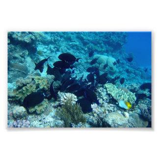 Great Barrier Reef Fotodruck