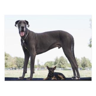 Great dane und kleiner Misch-zucht Hund Postkarte