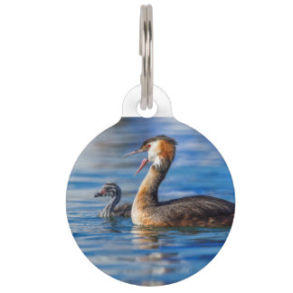 Grebe, Podiceps cristatus, Ente und Baby mit Haube Tiernamensmarke