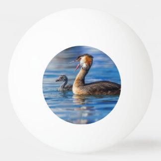 Grebe, Podiceps cristatus, Ente und Baby mit Haube Tischtennis Ball
