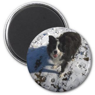 Grenzcollie-Foto auf Produkten Runder Magnet 5,1 Cm