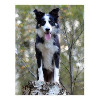 Grenzcollie-Welpen-Hund - freier Raum, hallo, Postkarte