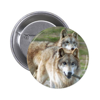grey-wolf2-10x10 buttons