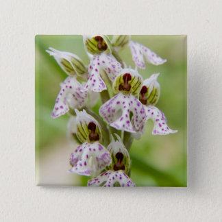 Griechenland, Kreta. Orchidee in der Blüte Orchis Quadratischer Button 5,1 Cm