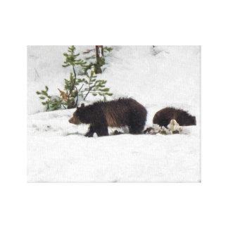 Grizzlies in der Schnee ausgedehnten Leinwand