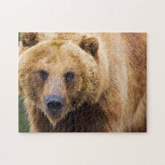 Grizzly-Bär nah genug Puzzle