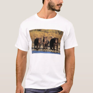 Grizzlybär, Braunbär, Junge, Katmai T-Shirt
