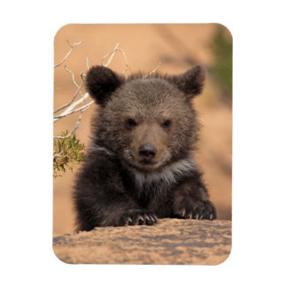 Grizzlybär CUB Magnet