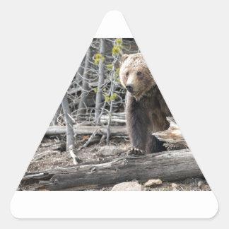 Grizzlybär in Yellowstone Nationalpark USA Dreieckiger Aufkleber
