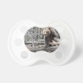 Grizzlybär in Yellowstone Nationalpark USA Schnuller