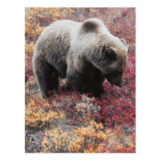 Grizzlybär-Postkarte Postkarte