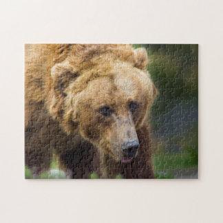 Grizzlybär Puzzle