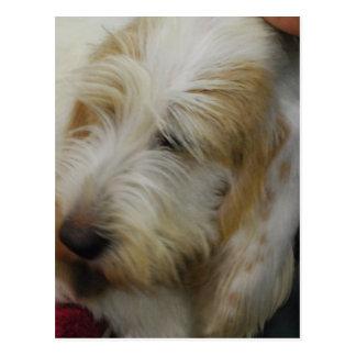 Großartige Dachshund-Hundepostkarte Postkarte