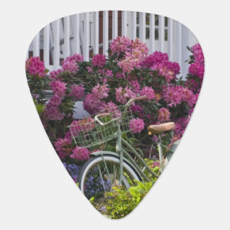 Großartige Frühlingsblüte, wunderliche Antike Plektrum