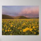 Großartige Wildblumewiese am Sonnenaufgang in Poster