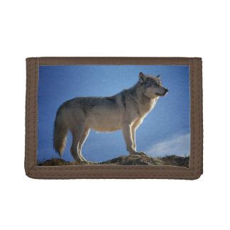 Großartiger Wolf