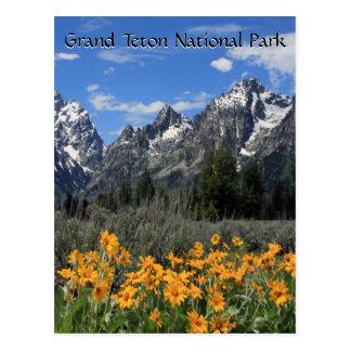 Großartiges Tetons mit Schnee-und Frühlings-Blumen Postkarte