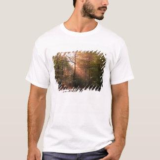 Großbritannien. Wald von Dekan. Sunbeam, der a T-Shirt