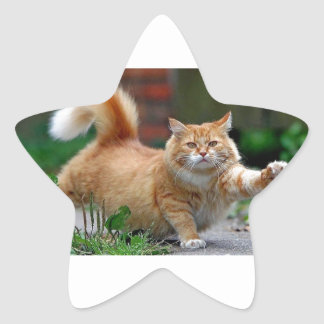 Große fette orange Katze Stern-Aufkleber