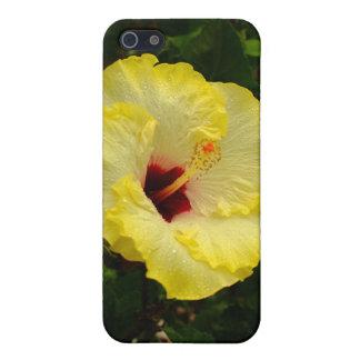 Große gelbe Hibiskus-Blume iPhone 5 Case