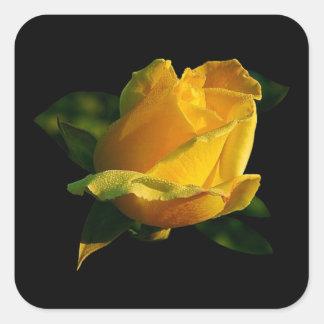 Große gelbe Rose Quadratischer Aufkleber