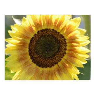Große gelbe Sonnenblume Postkarte