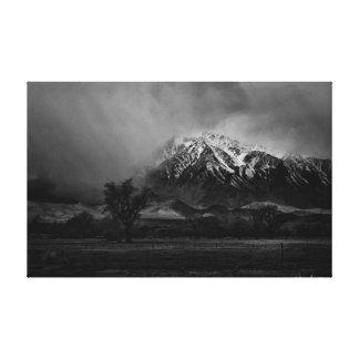 Große Kiefer Kalifornien Leinwanddruck