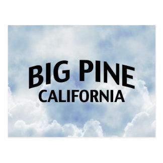 Große Kiefer Kalifornien Postkarte