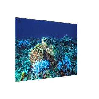 Große Meeresschildkröte auf dem Great Barrier Reef Leinwanddruck