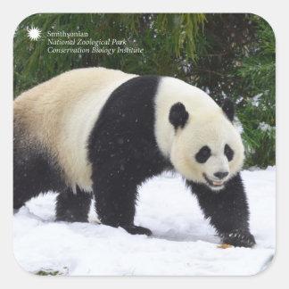 Große Pandas Smithsonian | im Schnee Quadratischer Aufkleber