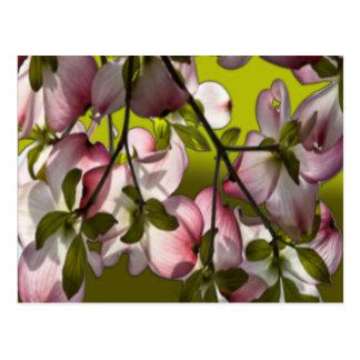 Große rosa Hartriegel-Blumen - Grün Postkarte