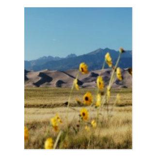 Große Sanddünen und Blumen Postkarte