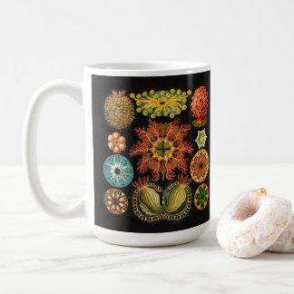 Große Tasse Haeckel Stachelhäuters