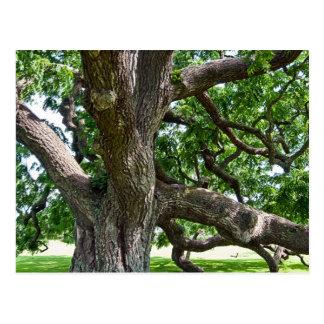 Großer alter Baum Postkarte