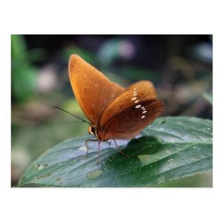 Großer Faun-Schmetterling Postkarte