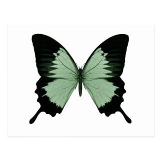 Großer grüner u. schwarzer Schmetterling Postkarten