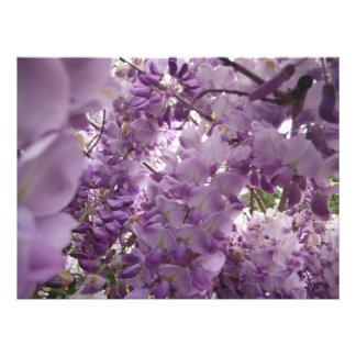 großer lila heller Blumengarten Fotodruck