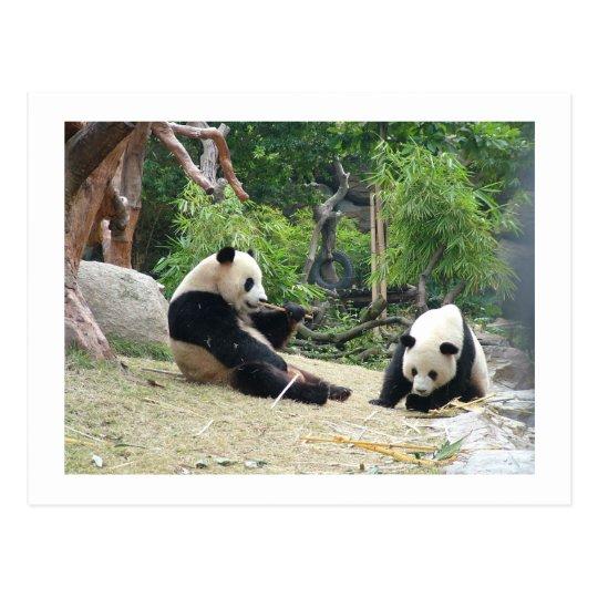 gro er panda bambus postkarte zazzle. Black Bedroom Furniture Sets. Home Design Ideas