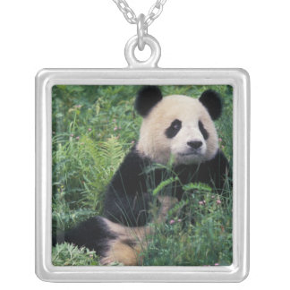 Großer Panda im Gras, Wolong Tal, Sichuan Versilberte Kette